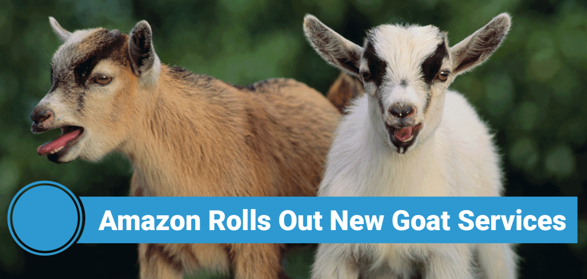 Amazon Rolls Out New Goat Services Amazon Home Services