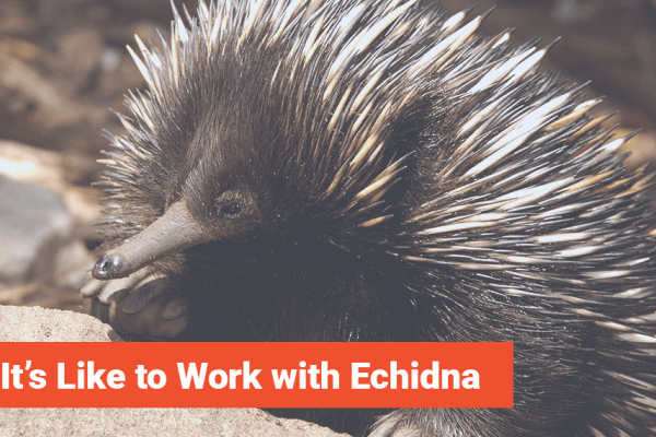 What It's Like to Work with Echidna, Echidna Minneapolis eCommerce Agency